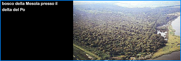 adriatico bosco mesola delta po