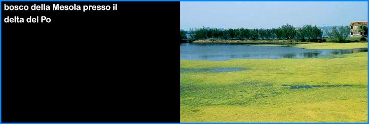 adriatico laguna venezia mesola delta po